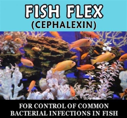Paradise pets fish flex cephalexin for Fish flex for dogs