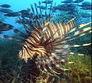 Salt Water Fish on Paradise Pets  Saltwater Fish
