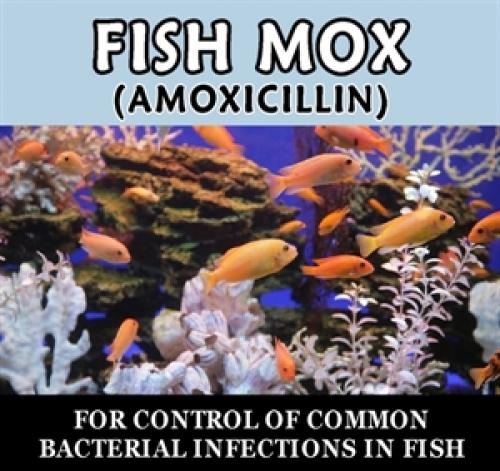 paradise pets fish mox amoxicillin. Black Bedroom Furniture Sets. Home Design Ideas